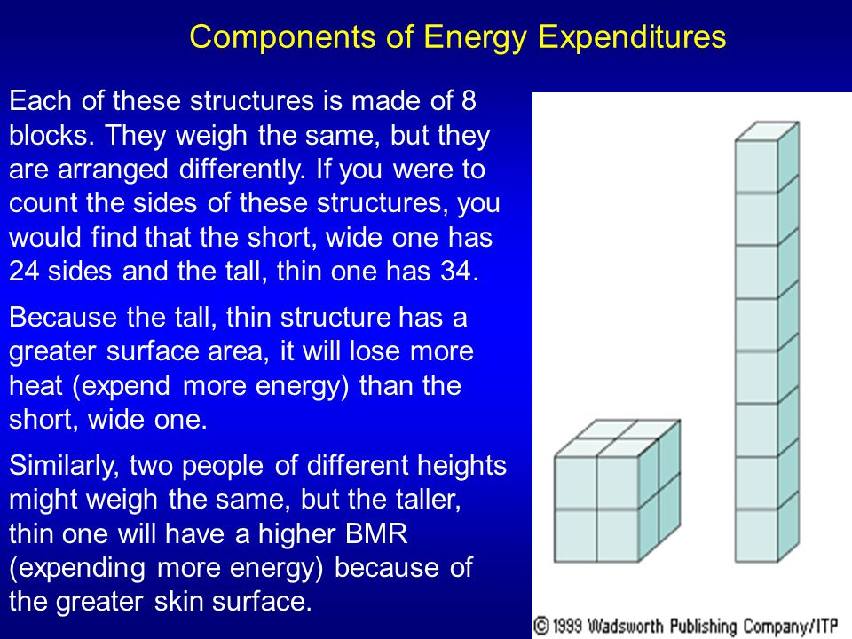Components of Energy Expenditures Each of these structures is made of 8 blocks. They weigh the same, but they are arranged differently. If you were to