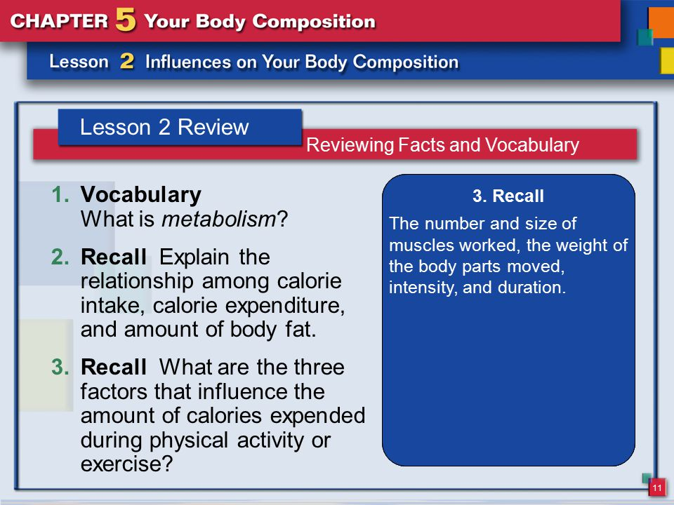 11 Lesson 2 Review 1.Vocabulary What is metabolism? 2.Recall Explain the relationship among calorie intake, calorie expenditure, and amount of body fa