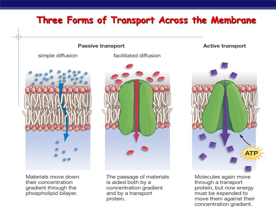 Transport summary simple diffusion facilitated diffusion active transport ATP