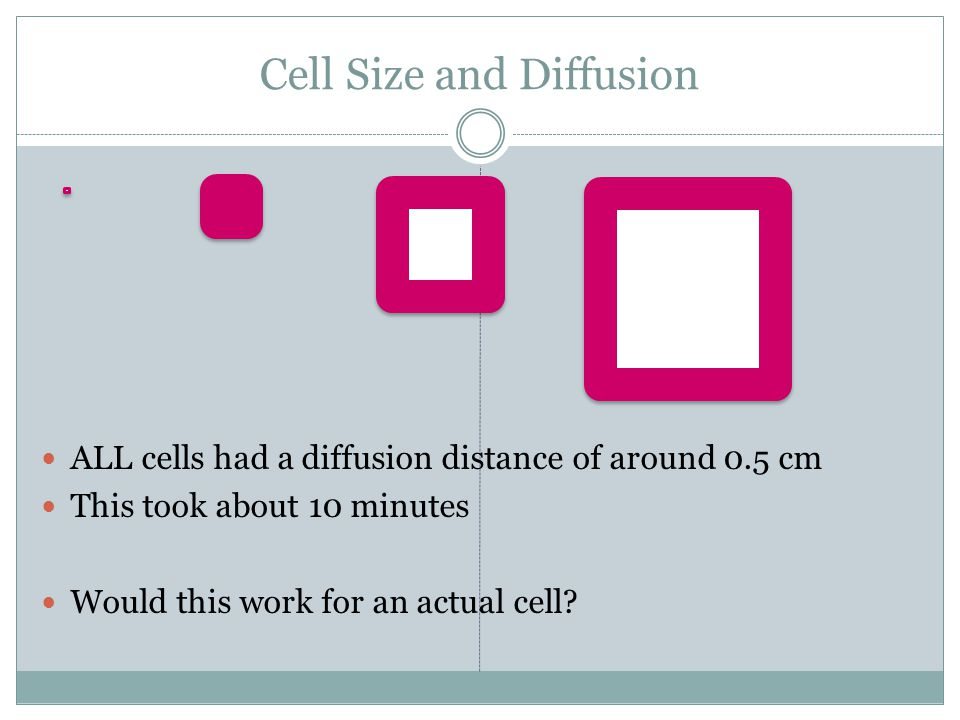 Cell Size and Diffusion ALL cells had a diffusion distance of around 0.5 cm This took about 10 minutes Would this work for an actual cell?