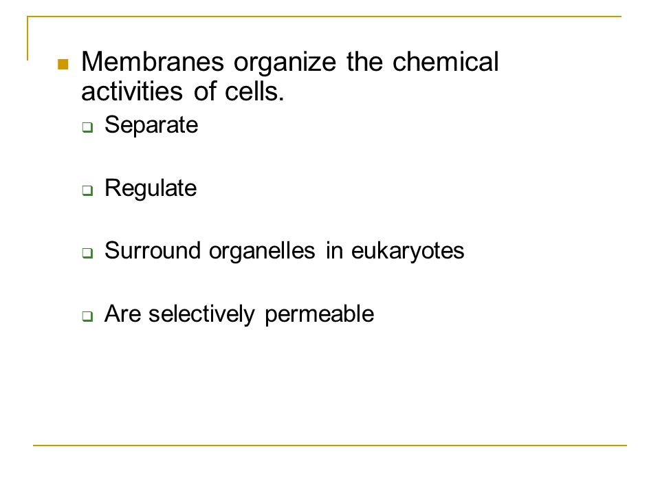 Membranes organize the chemical activities of cells.  Separate  Regulate  Surround organelles in eukaryotes  Are selectively permeable