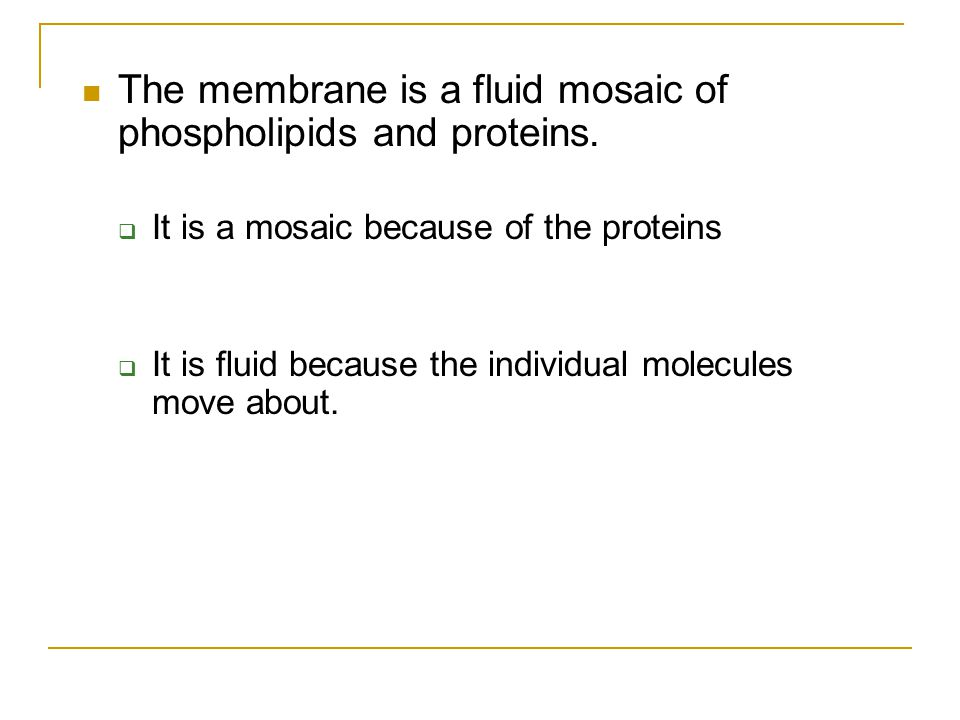 The membrane is a fluid mosaic of phospholipids and proteins.  It is a mosaic because of the proteins  It is fluid because the individual molecules