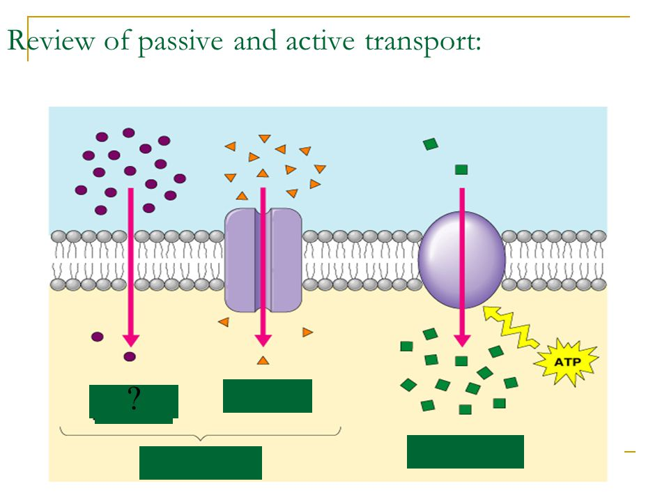 Review of passive and active transport: