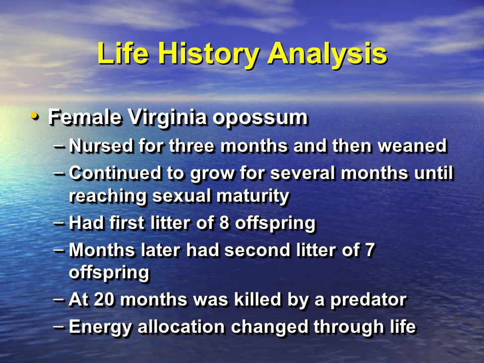 Life History Analysis Female Virginia opossum Female Virginia opossum – Nursed for three months and then weaned – Continued to grow for several months until reaching sexual maturity – Had first litter of 8 offspring – Months later had second litter of 7 offspring – At 20 months was killed by a predator – Energy allocation changed through life Female Virginia opossum Female Virginia opossum – Nursed for three months and then weaned – Continued to grow for several months until reaching sexual maturity – Had first litter of 8 offspring – Months later had second litter of 7 offspring – At 20 months was killed by a predator – Energy allocation changed through life