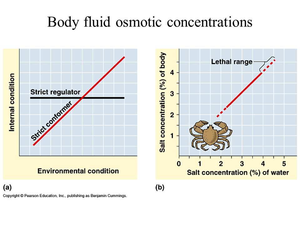 Body fluid osmotic concentrations