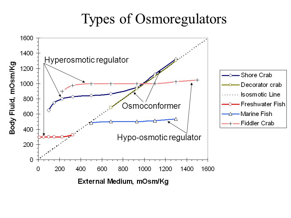 Types of Osmoregulators Hyperosmotic regulator Osmoconformer Hypo-osmotic regulator