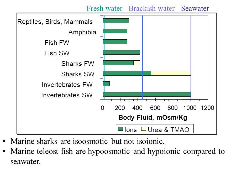 020040060080010001200 Invertebrates SW Invertebrates FW Sharks SW Sharks FW Fish SW Fish FW Amphibia Reptiles, Birds, Mammals Body Fluid, mOsm/Kg Ions