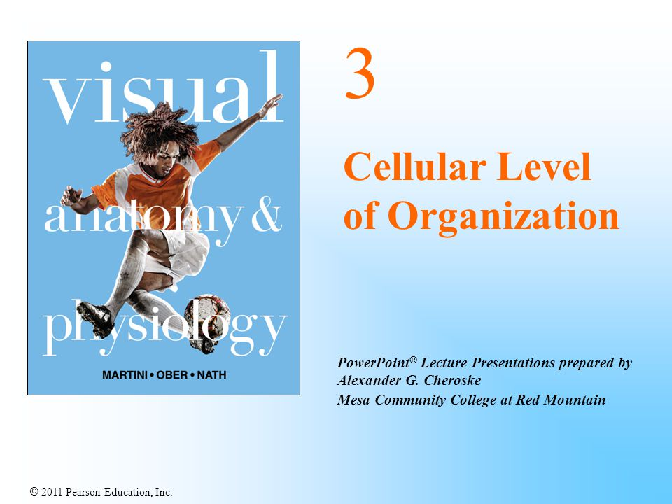 © 2011 Pearson Education, Inc. PowerPoint ® Lecture Presentations prepared by Alexander G. Cheroske Mesa Community College at Red Mountain 3 Cellular