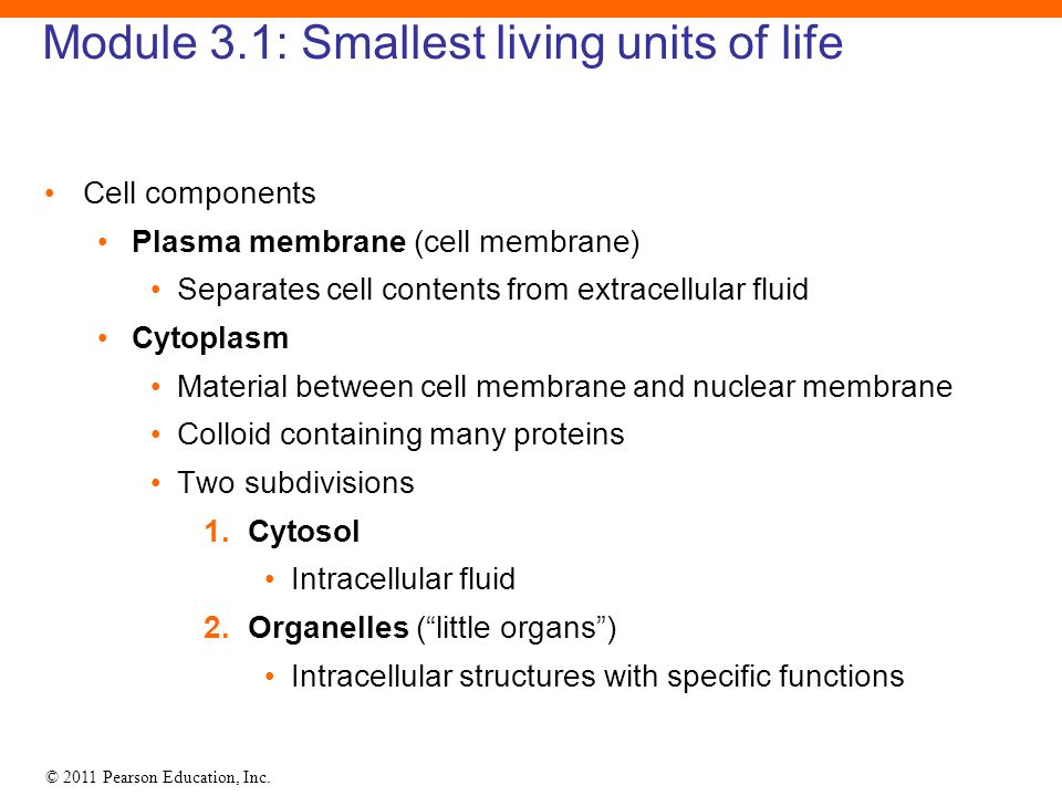 © 2011 Pearson Education, Inc. Module 3.1: Smallest living units of life Cell components Plasma membrane (cell membrane) Separates cell contents from