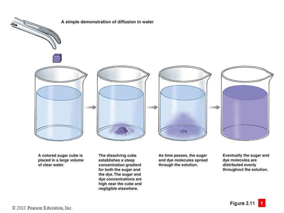 © 2011 Pearson Education, Inc. Figure 3.11 1