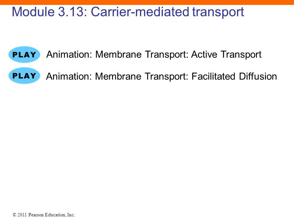 © 2011 Pearson Education, Inc. Module 3.13: Carrier-mediated transport Animation: Membrane Transport: Facilitated Diffusion Animation: Membrane Transp
