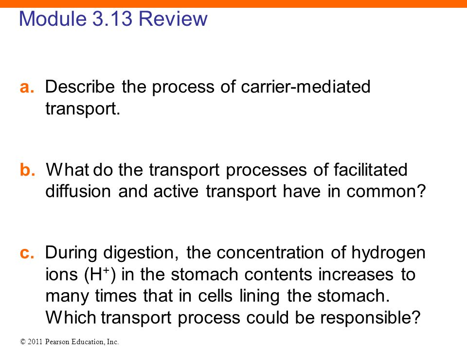 © 2011 Pearson Education, Inc. Module 3.13 Review a. Describe the process of carrier-mediated transport. b. What do the transport processes of facilit