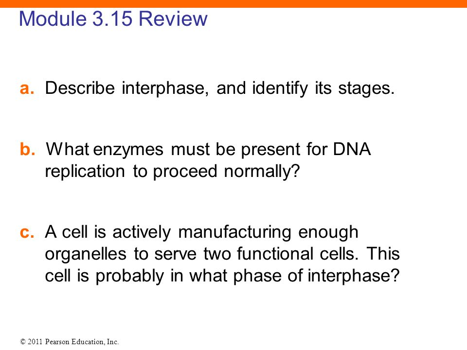 © 2011 Pearson Education, Inc. Module 3.15 Review a. Describe interphase, and identify its stages. b. What enzymes must be present for DNA replication