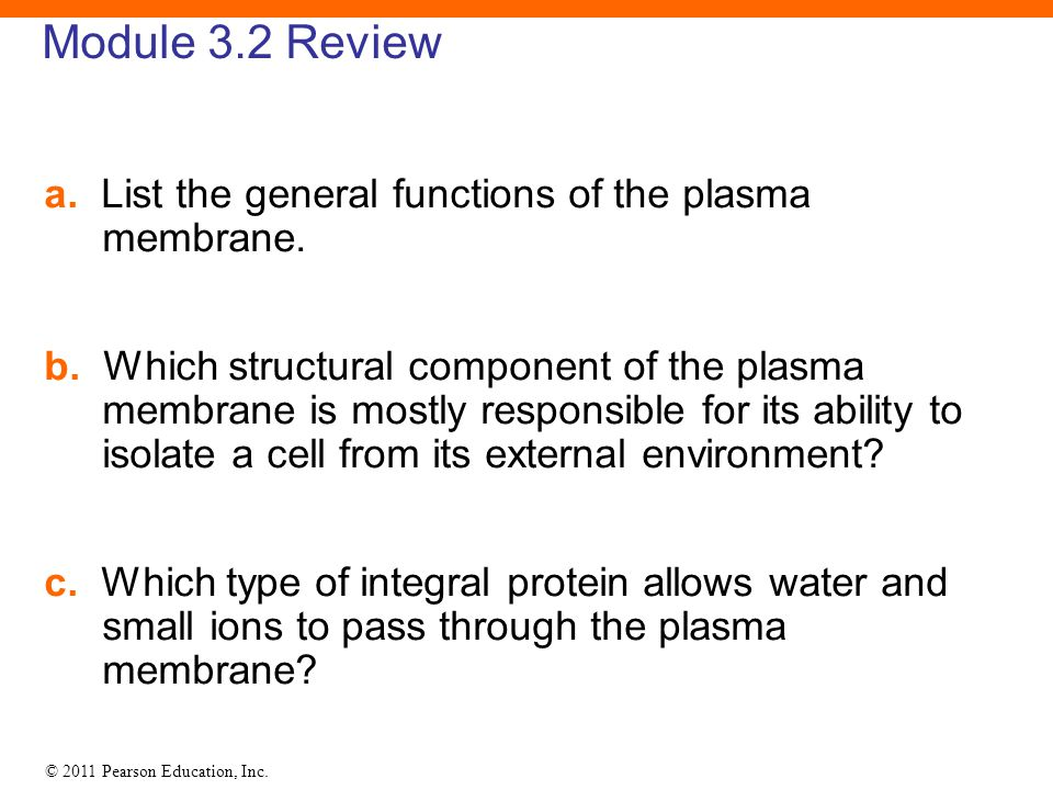 © 2011 Pearson Education, Inc. Module 3.2 Review a. List the general functions of the plasma membrane. b. Which structural component of the plasma mem