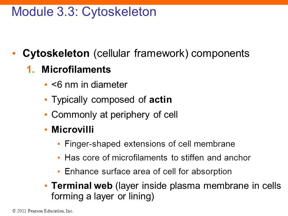 © 2011 Pearson Education, Inc. Module 3.3: Cytoskeleton Cytoskeleton (cellular framework) components 1. Microfilaments <6 nm in diameter Typically com