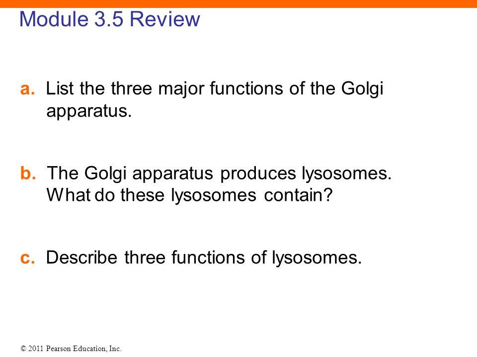 © 2011 Pearson Education, Inc. Module 3.5 Review a. List the three major functions of the Golgi apparatus. b. The Golgi apparatus produces lysosomes.