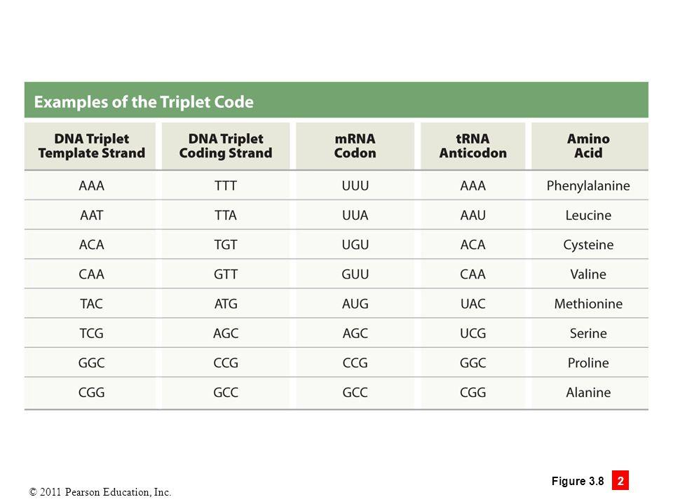 © 2011 Pearson Education, Inc. Figure 3.8 2