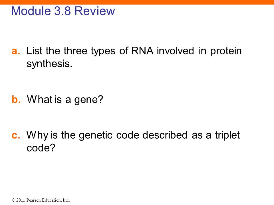 © 2011 Pearson Education, Inc. Module 3.8 Review a. List the three types of RNA involved in protein synthesis. b. What is a gene? c. Why is the geneti