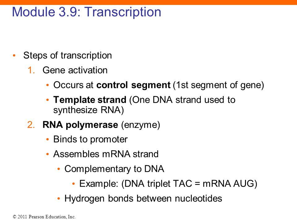 © 2011 Pearson Education, Inc. Module 3.9: Transcription Steps of transcription 1. Gene activation Occurs at control segment (1st segment of gene) Tem