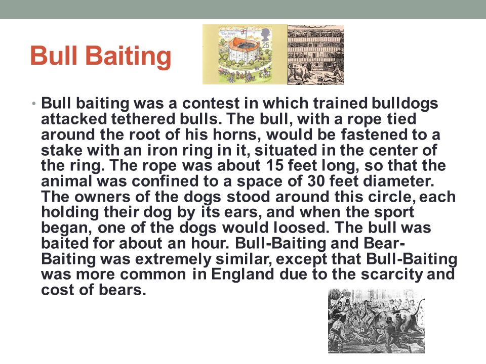 Bull Baiting Bull baiting was a contest in which trained bulldogs attacked tethered bulls.
