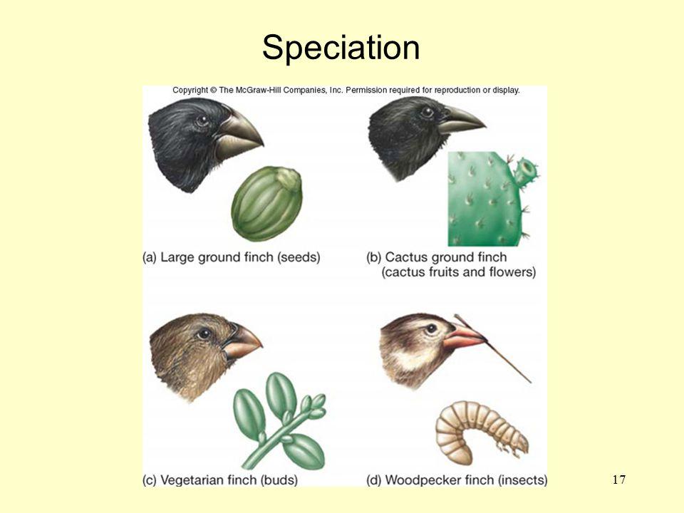 17 Speciation