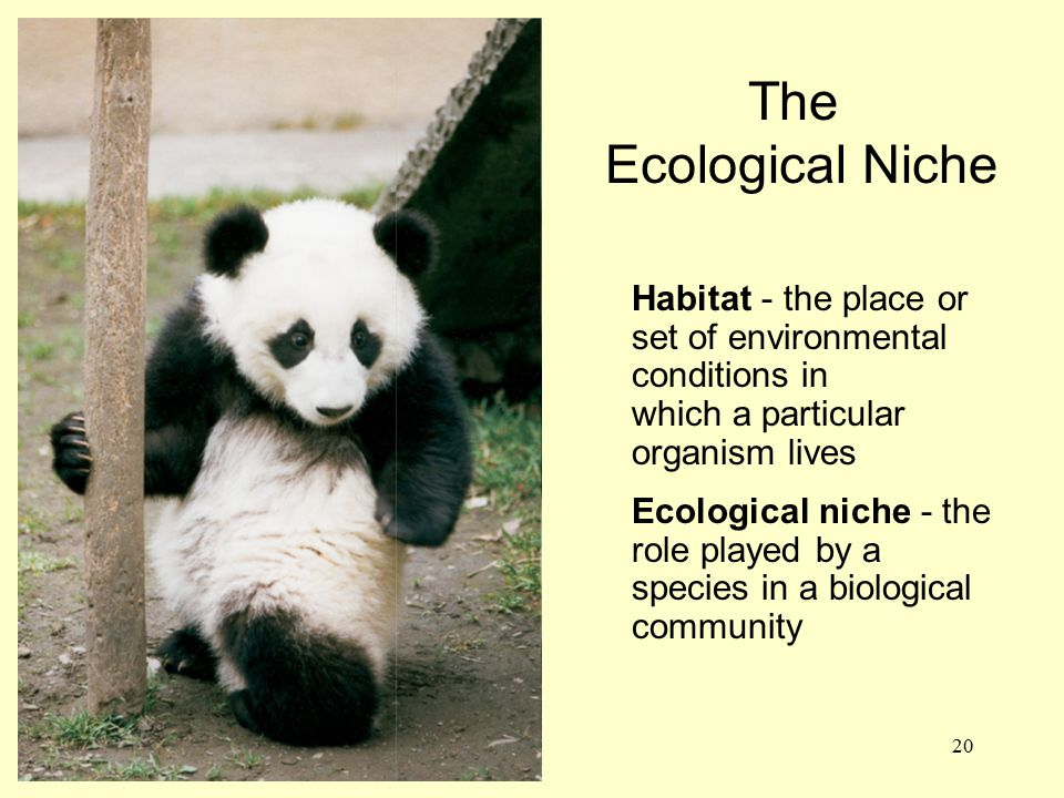 20 Habitat - the place or set of environmental conditions in which a particular organism lives Ecological niche - the role played by a species in a bi