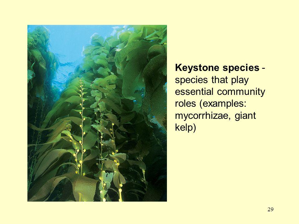 29 Keystone species - species that play essential community roles (examples: mycorrhizae, giant kelp)