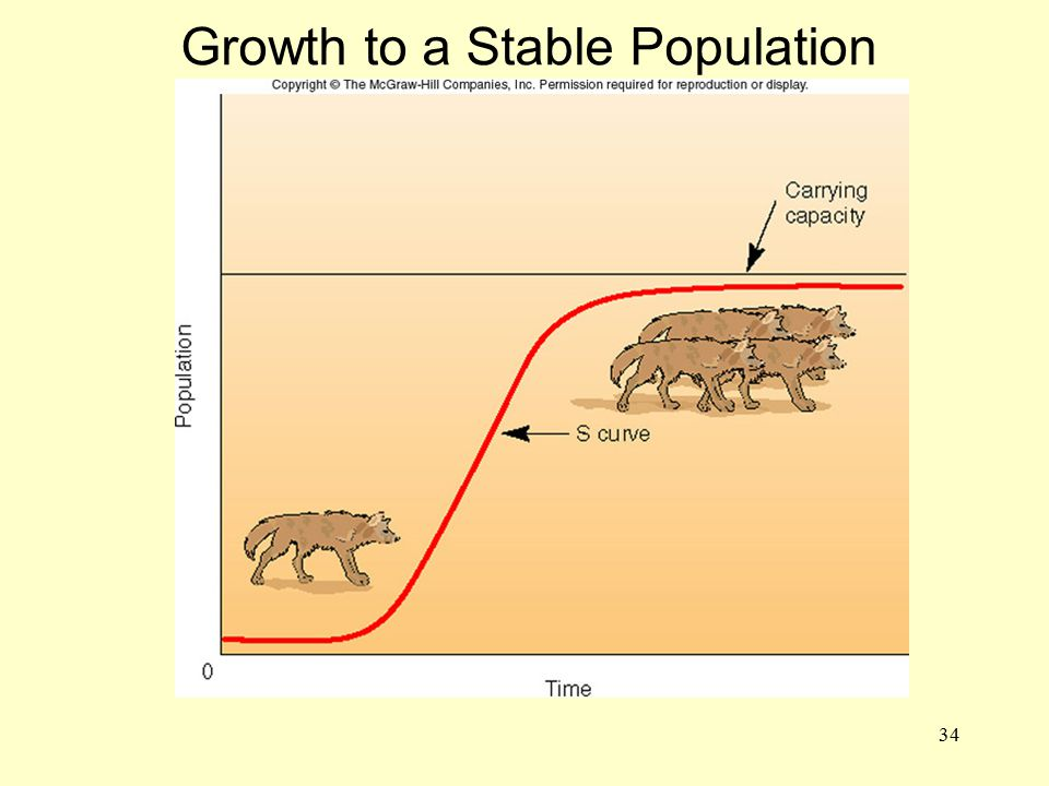 34 Growth to a Stable Population ADD FIG. 3.22