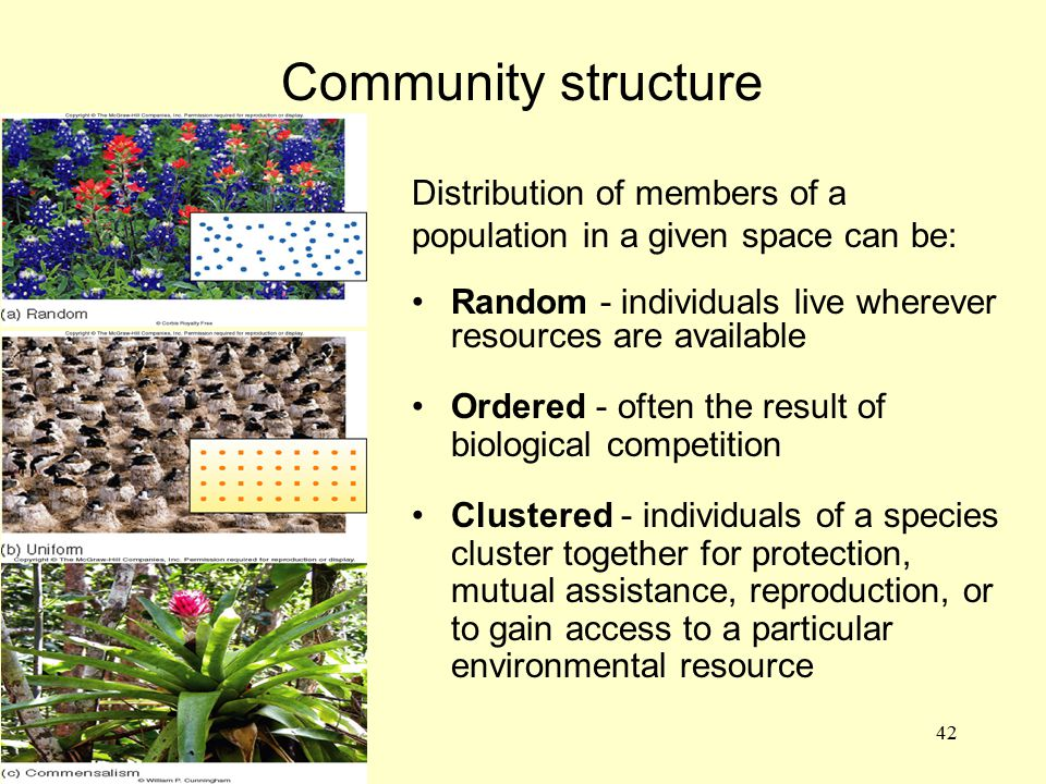 42 Community structure Distribution of members of a population in a given space can be: Random - individuals live wherever resources are available Ord