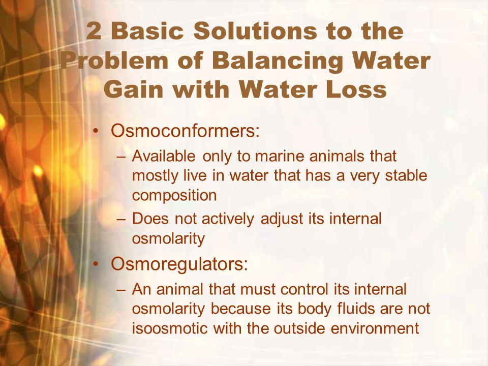 2 Basic Solutions to the Problem of Balancing Water Gain with Water Loss Osmoconformers: –Available only to marine animals that mostly live in water that has a very stable composition –Does not actively adjust its internal osmolarity Osmoregulators: –An animal that must control its internal osmolarity because its body fluids are not isoosmotic with the outside environment