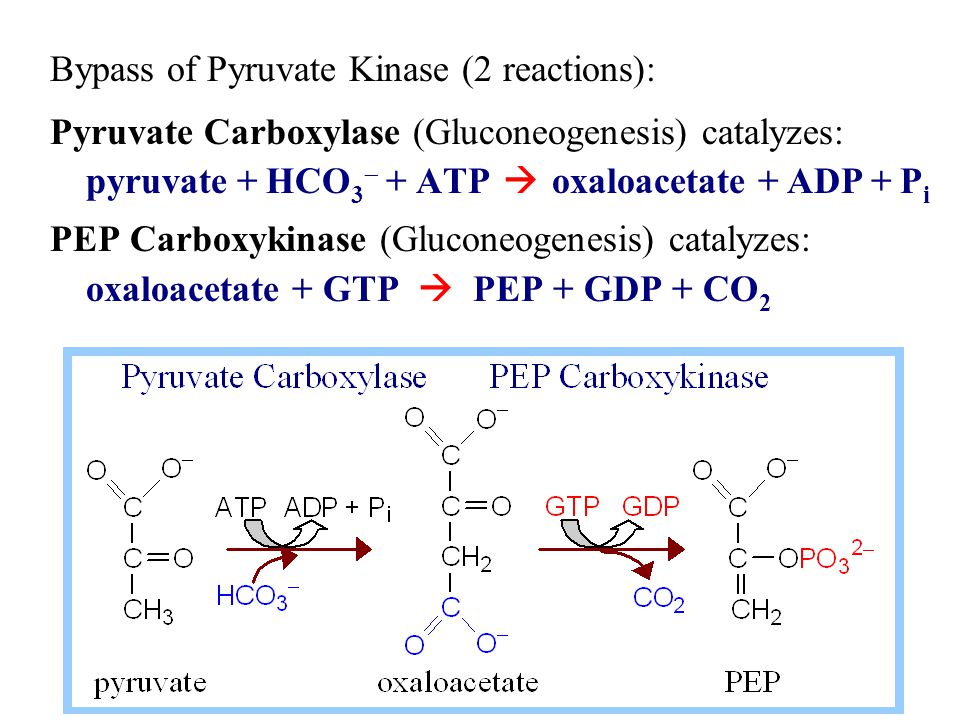 Contributing to spontaneity of the 2-step process: Free energy of one ~P bond of ATP is conserved in the carboxylation reaction.