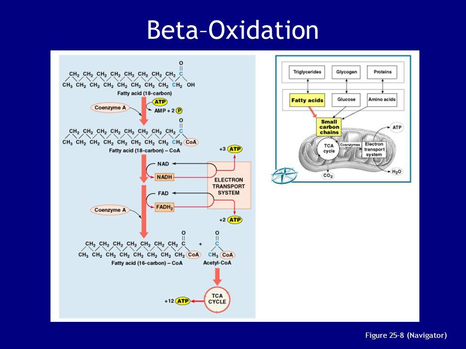 Beta–Oxidation Figure 25–8 (Navigator)