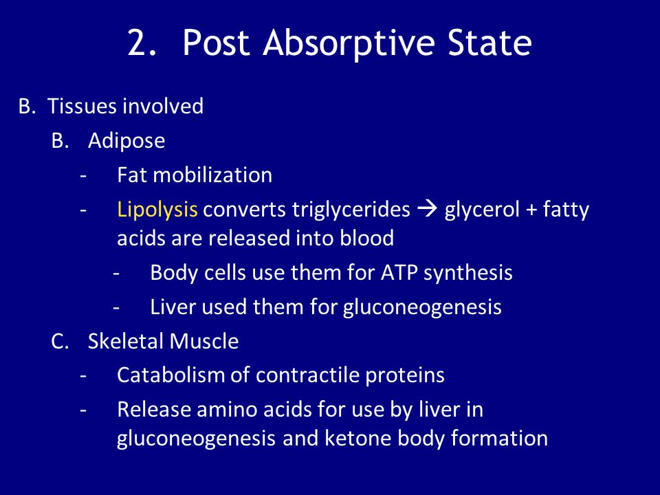 2. Post Absorptive State B. Tissues involved B.Adipose -Fat mobilization -Lipolysis converts triglycerides  glycerol + fatty acids are released into