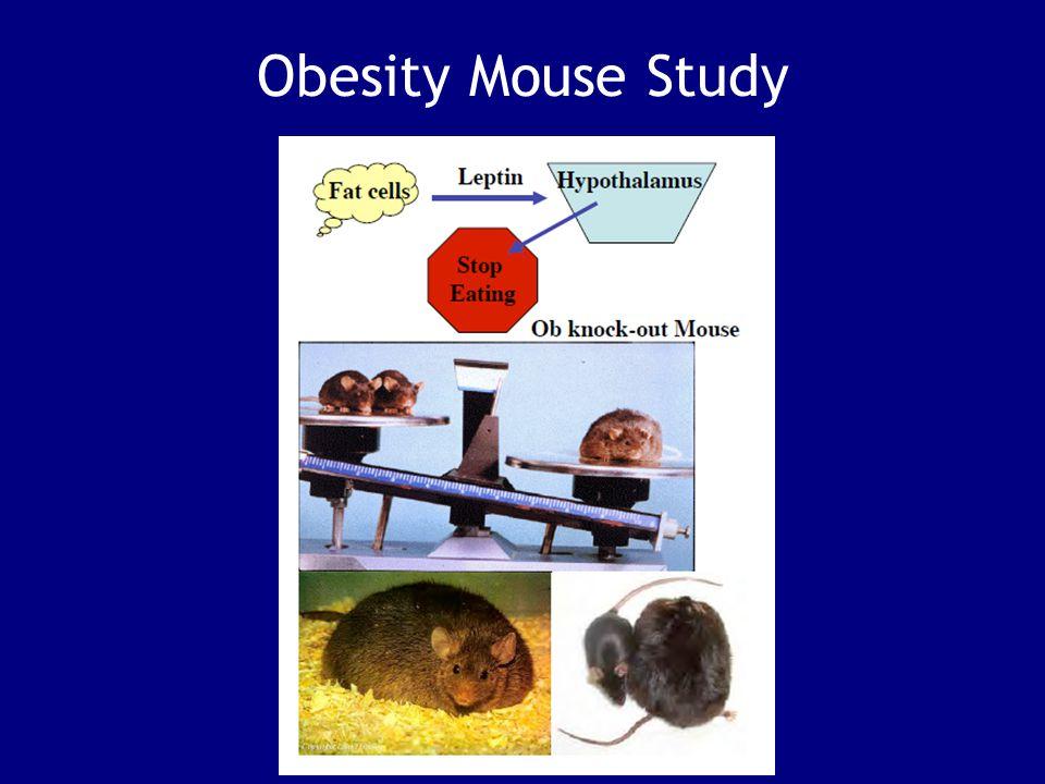 Obesity Mouse Study