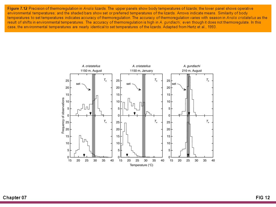 Chapter 07FIG 12 Figure 7.12 Precision of thermoregulation in Anolis lizards.