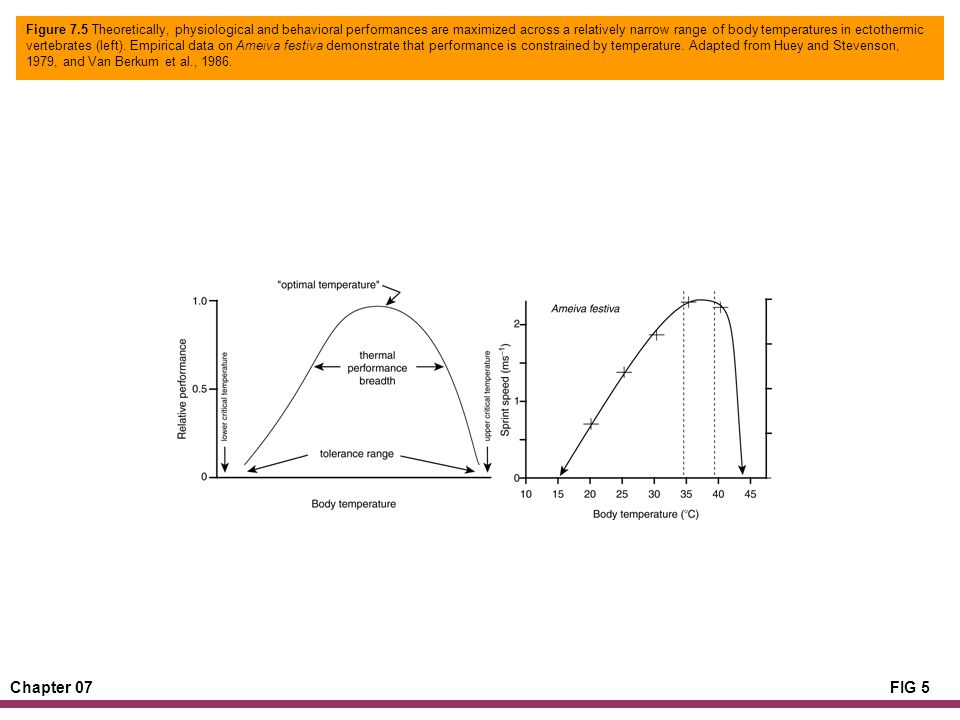 Chapter 07FIG 5 Figure 7.5 Theoretically, physiological and behavioral performances are maximized across a relatively narrow range of body temperatures in ectothermic vertebrates (left).