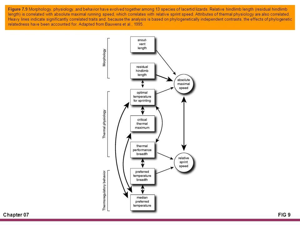 Chapter 07FIG 9 Figure 7.9 Morphology, physiology, and behavior have evolved together among 13 species of lacertid lizards.