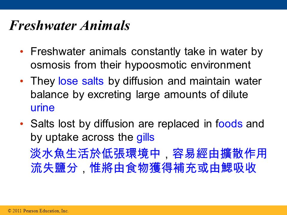 Freshwater Animals Freshwater animals constantly take in water by osmosis from their hypoosmotic environment They lose salts by diffusion and maintain