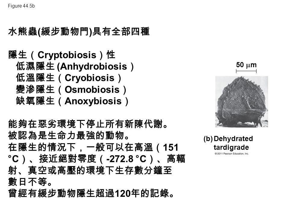 Figure 44.5b (b) Dehydrated tardigrade 50  m 水熊蟲 ( 緩步動物門 ) 具有全部四種 隱生( Cryptobiosis )性 低濕隱生 (Anhydrobiosis ) 低溫隱生( Cryobiosis ) 變滲隱生( Osmobiosis ) 缺氧隱