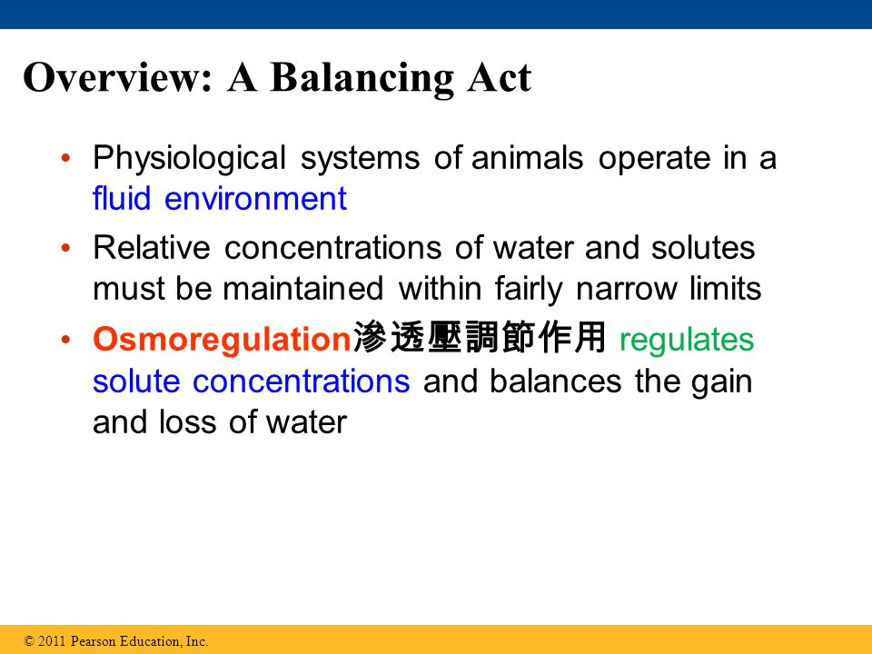Overview: A Balancing Act Physiological systems of animals operate in a fluid environment Relative concentrations of water and solutes must be maintai