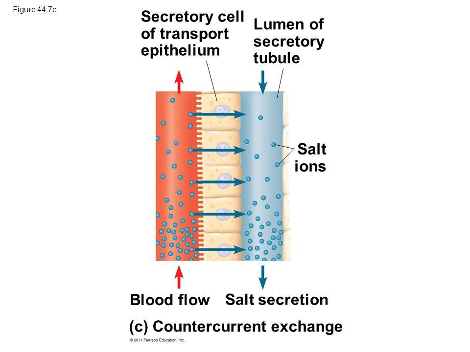 Figure 44.7c (c) Countercurrent exchange Secretory cell of transport epithelium Lumen of secretory tubule Salt ions Blood flow Salt secretion