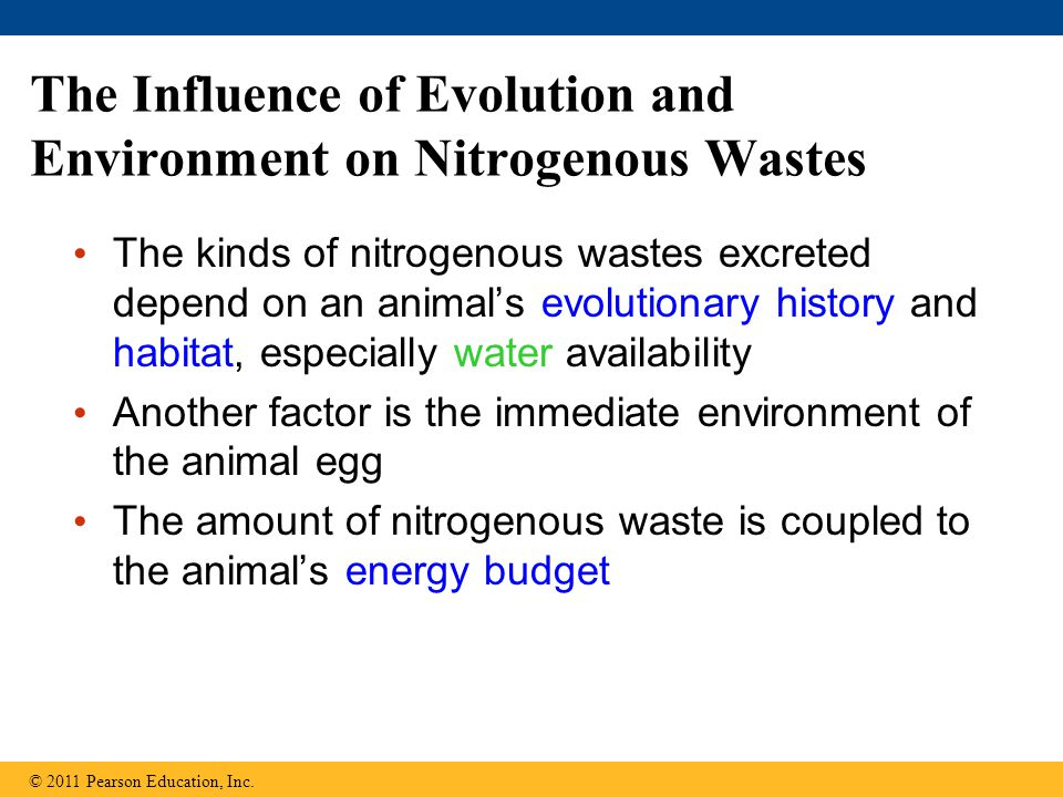 The Influence of Evolution and Environment on Nitrogenous Wastes The kinds of nitrogenous wastes excreted depend on an animal's evolutionary history a