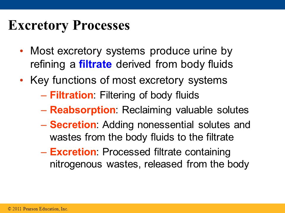 Excretory Processes Most excretory systems produce urine by refining a filtrate derived from body fluids Key functions of most excretory systems –Filt