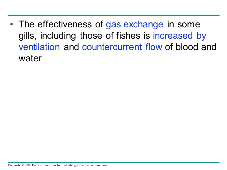 Copyright © 2005 Pearson Education, Inc. publishing as Benjamin Cummings The effectiveness of gas exchange in some gills, including those of fishes is