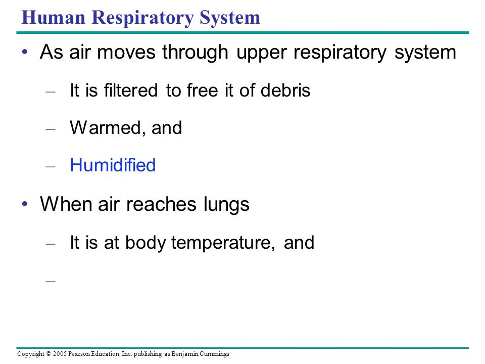 Copyright © 2005 Pearson Education, Inc. publishing as Benjamin Cummings Human Respiratory System As air moves through upper respiratory system – It i