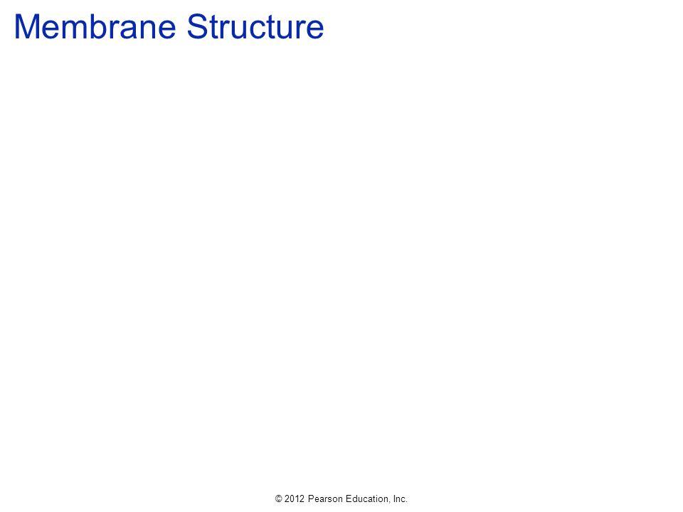 © 2012 Pearson Education, Inc. Membrane Structure