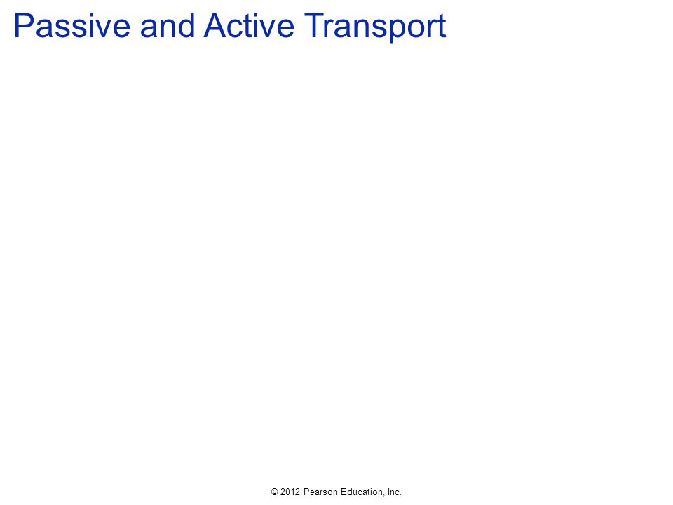 © 2012 Pearson Education, Inc. Passive and Active Transport
