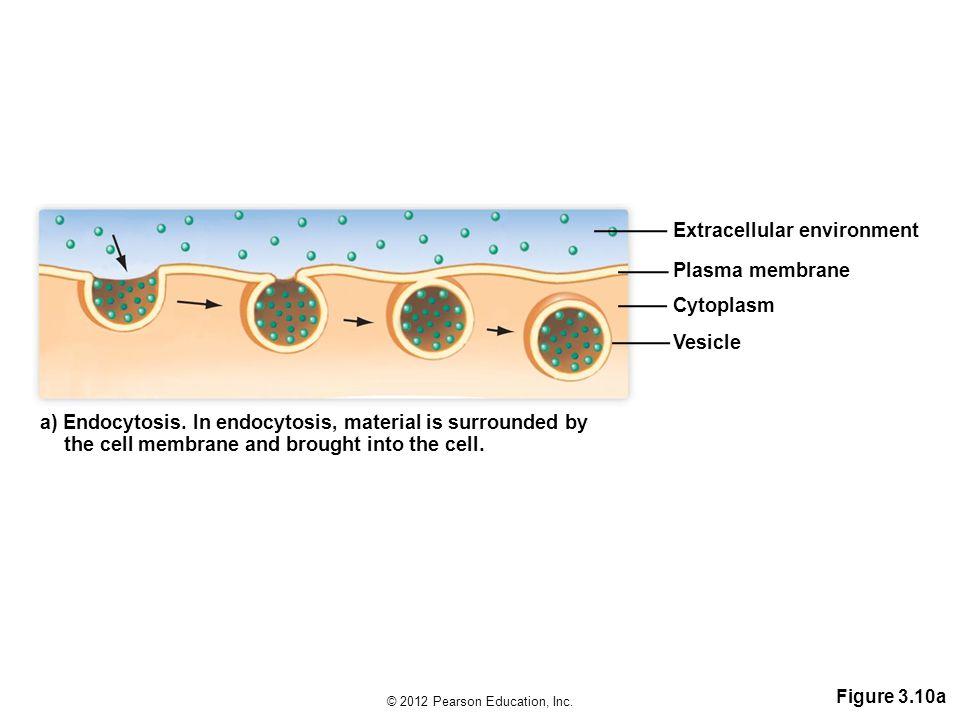 © 2012 Pearson Education, Inc.Figure 3.10a a) Endocytosis.