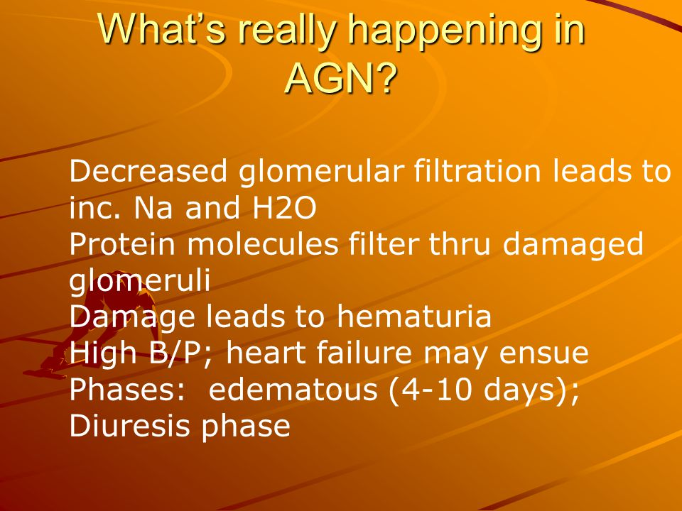 What's really happening in AGN? Decreased glomerular filtration leads to inc. Na and H2O Protein molecules filter thru damaged glomeruli Damage leads