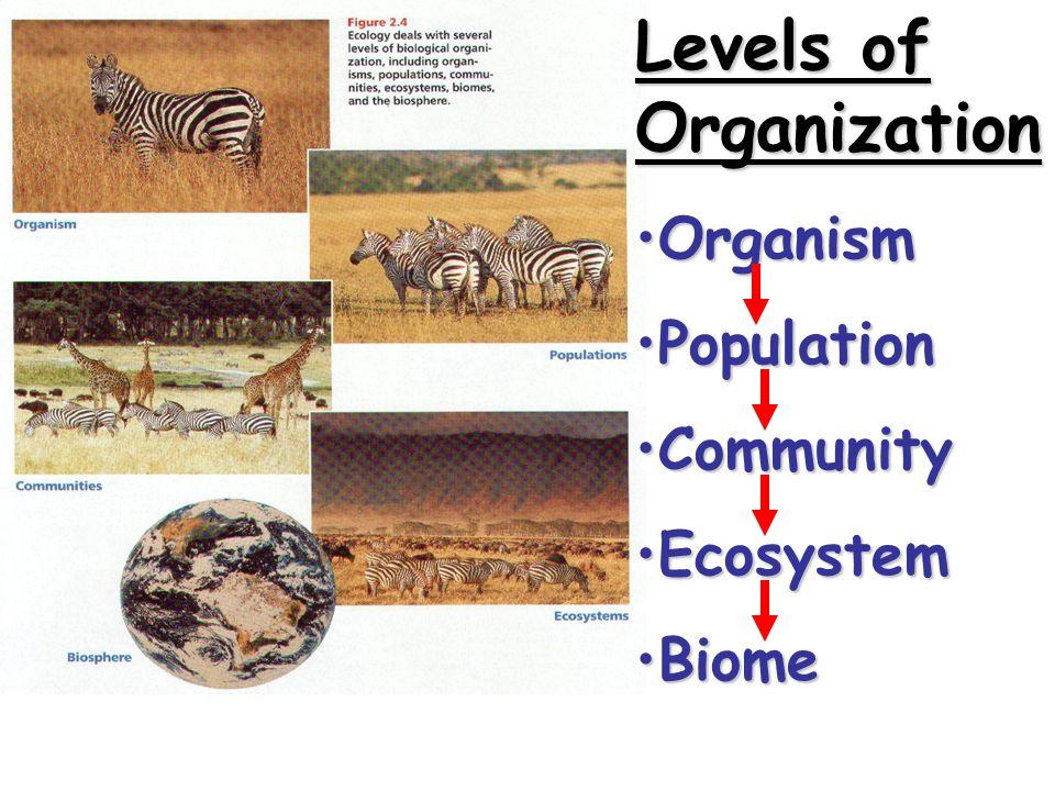 Levels of Organization OrganismOrganism PopulationPopulation CommunityCommunity EcosystemEcosystem BiomeBiome